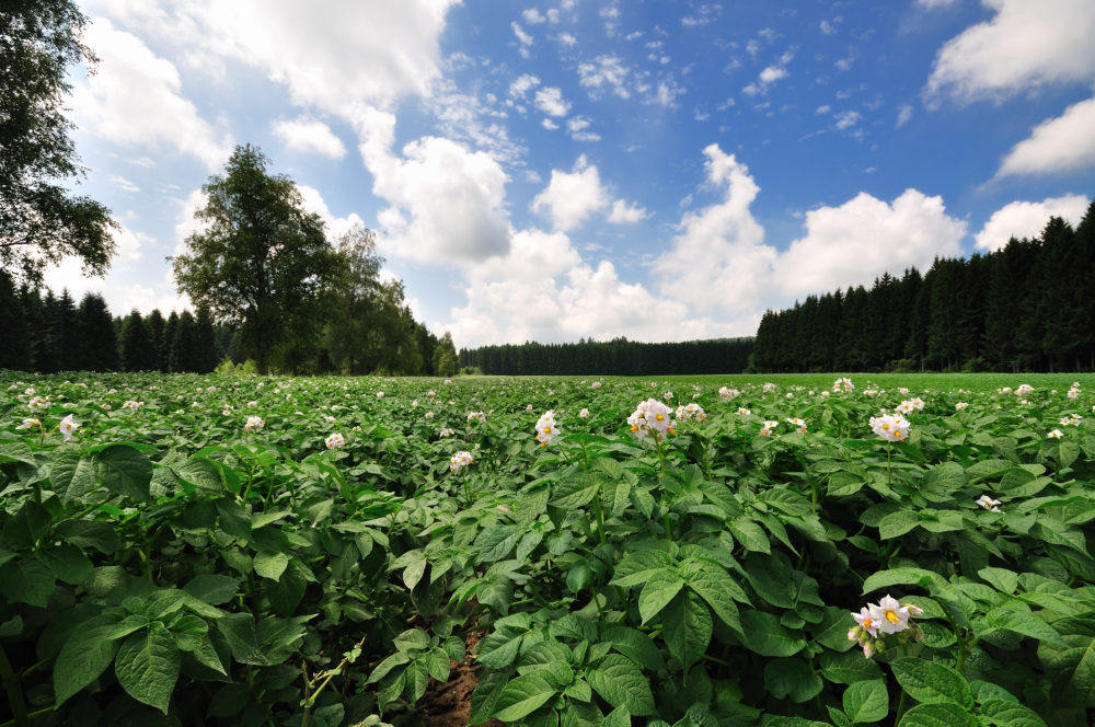 Maximise protection, prevent blight infection