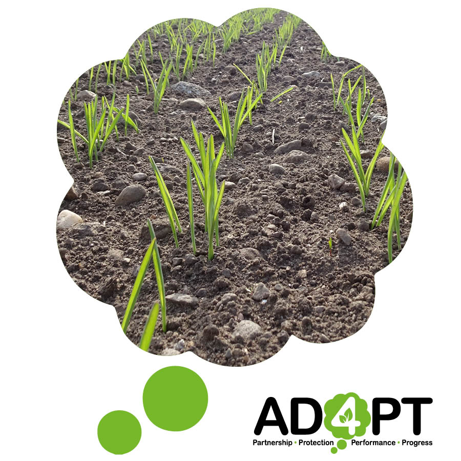 AD4PT Newsletter 2020 edition