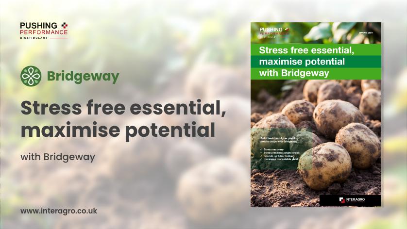 Stress free higher yielding potatoes with Bridgeway
