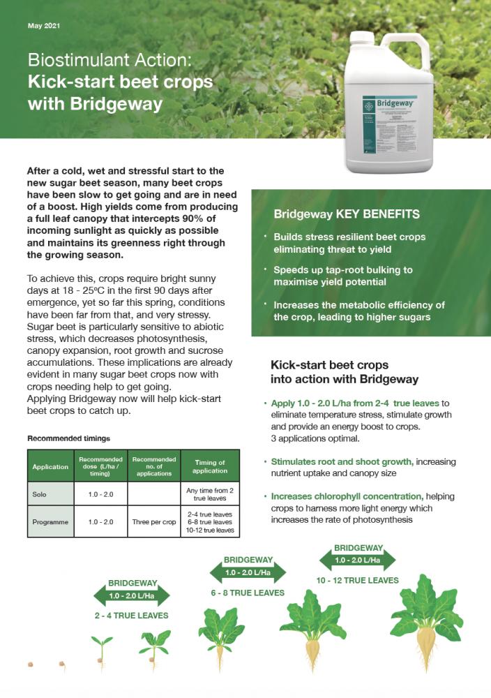 Kick-start beet crops with Bridgeway